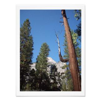 """¡""""Impresión de la foto del valle de Yosemite del"""