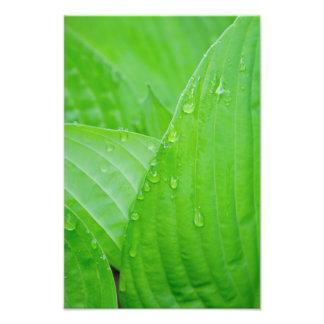 Impresión de la fotografía de las hojas y de las g foto
