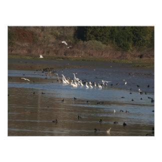 Impresión de la fotografía de los pájaros del ave