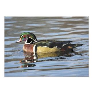 Impresión de la fotografía del pato de madera fotografías