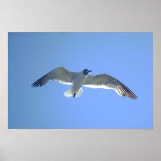 Impresión de la gaviota en vuelo posters