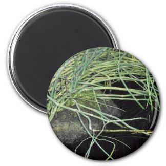 Impresión de la hierba de la serpiente - serie de  imán redondo 5 cm