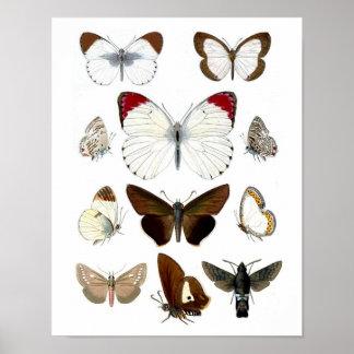 Impresión de la historia natural de la imagen 7 d impresiones