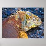 Impresión de la iguana de las Islas Galápagos Impresiones