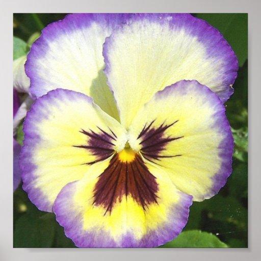 Impresión de la imagen de la flor del pensamiento impresiones