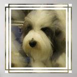 Impresión de la imagen del perro pastor impresiones