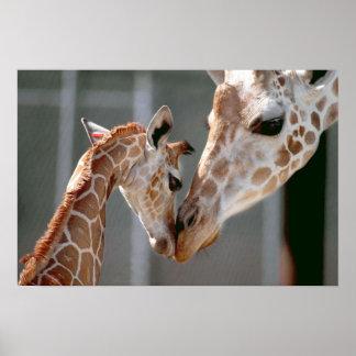 Impresión de la jirafa y del bebé póster