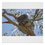 Impresión de la koala impresiones