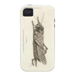 Impresión de la langosta vibe iPhone 4 fundas