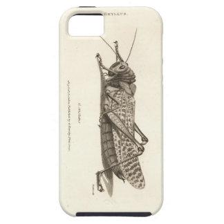 Impresión de la langosta iPhone 5 funda
