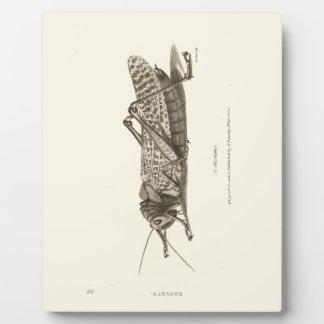 Impresión de la langosta placas con foto