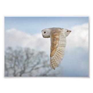 Impresión de la lechuza común en vuelo fotografías