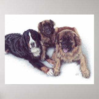 Impresión de la lona de 3 perros póster