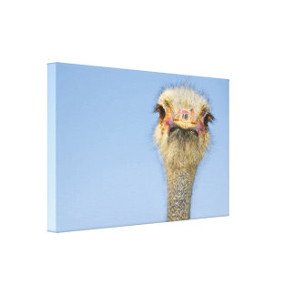 Impresión de la lona de la avestruz lona estirada galerias