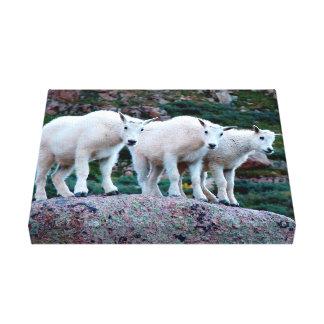 Impresión de la lona de la cabra de montaña del