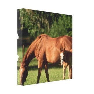 Impresión de la lona de la familia del caballo impresion en lona