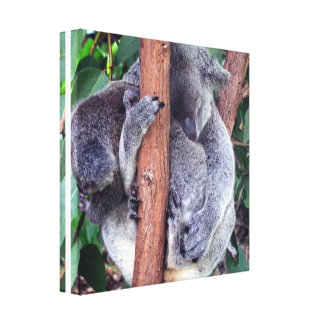 Impresión de la lona de la familia del oso de koal impresión de lienzo