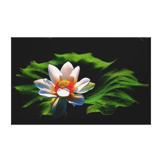 Impresión de la lona de la flor de Lotus Impresión En Tela