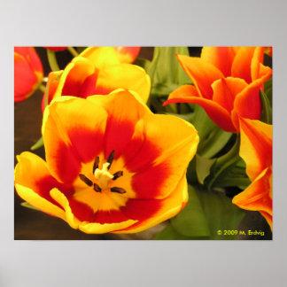 Impresión de la lona de la gloria de la primavera poster