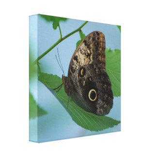 Impresión de la lona de la mariposa de Barnowl Lienzo Envuelto Para Galerias