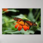 Impresión de la lona de la mariposa de monarca poster