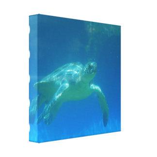 Impresión de la lona de la nadada de la tortuga de lona estirada galerias