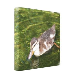 Impresión de la lona de la natación del pato del b lona envuelta para galerías