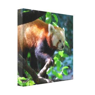 Impresión de la lona de la panda roja que sube lona estirada galerías