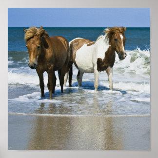 Impresión de la lona de la playa del caballo póster