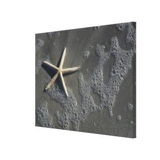 Impresión de la lona de las estrellas de mar de la lona envuelta para galerias