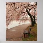 Impresión de la lona de las flores de cerezo posters