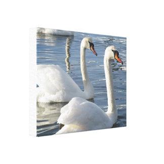 Impresión de la lona de las reflexiones del cisne lona envuelta para galerias