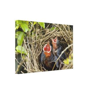 Impresión de la lona de los pájaros de bebé lienzo envuelto para galerias