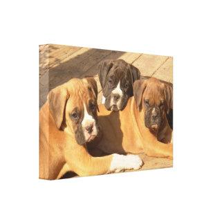 Impresión de la lona de los perritos del boxeador impresion en lona