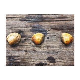 Impresión de la lona de los Seashells Impresión En Lona
