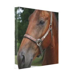 Impresión de la lona del caballo de la castaña dul impresiones en lona estiradas