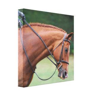 Impresión de la lona del caballo de la demostració lona estirada galerias