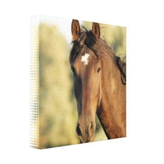 Impresión de la lona del caballo de Morgan Impresiones En Lona Estiradas
