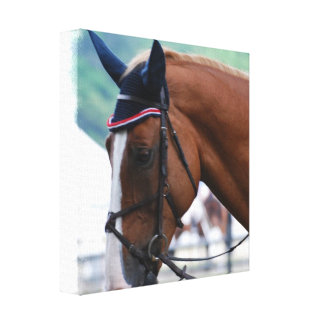 Impresión de la lona del caballo de Warmblood del  Impresiones En Lona Estiradas