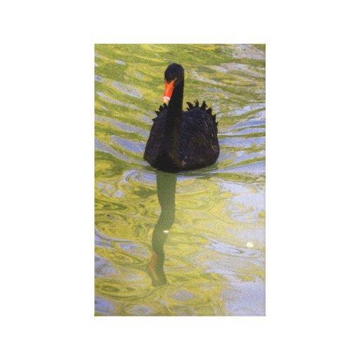 Impresión de la lona del cisne negro impresiones en lona