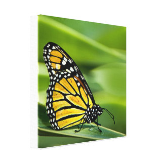 Impresión de la lona del diseño de la mariposa de impresión de lienzo