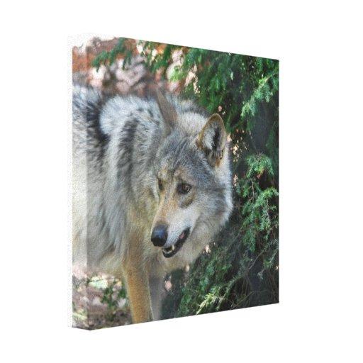 Impresión de la lona del gruñido del lobo impresiones en lienzo estiradas