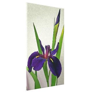 Impresión de la lona del iris de Luisiana Impresión En Lienzo Estirada