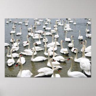 Impresión de la lona del lago swan póster