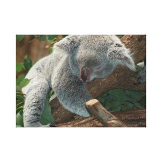 Impresión de la lona del oso de koala el dormir impresión en lona estirada