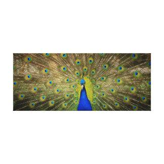 Impresión de la lona del pavo real impresiones en lona