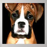 Impresión de la lona del perrito del boxeador posters