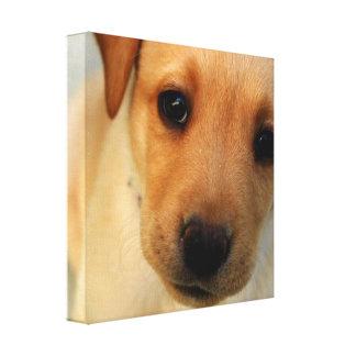 Impresión de la lona del perrito del labrador retr