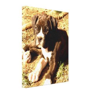 impresión de la lona del perro del boxeador impresión de lienzo