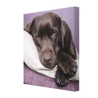 Impresión de la lona del perro del labrador retrie impresiones en lona